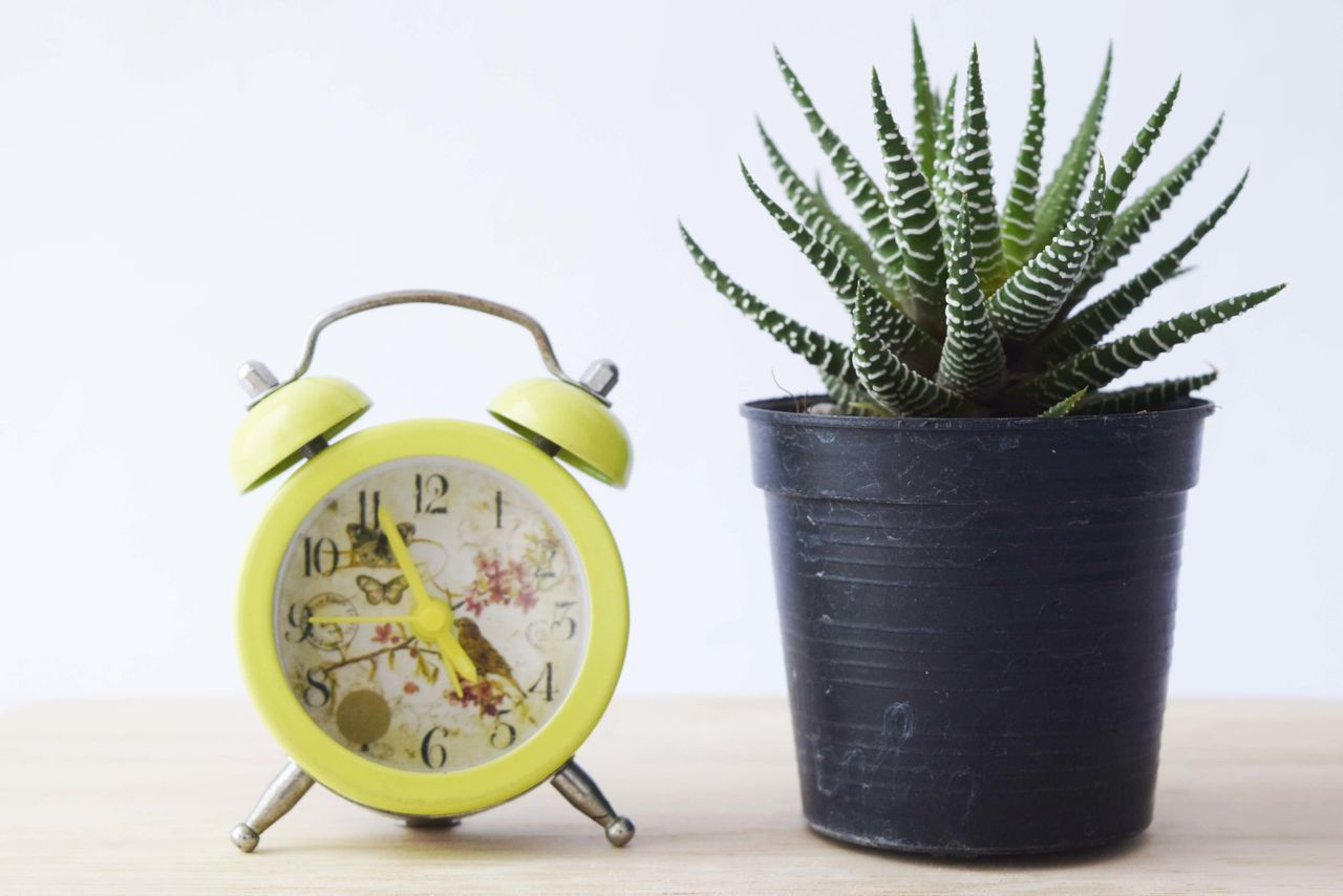 still life, growth, table, potted plant, indoors, no people, plant, studio shot, green color, white background, time, close-up, day, freshness, clock