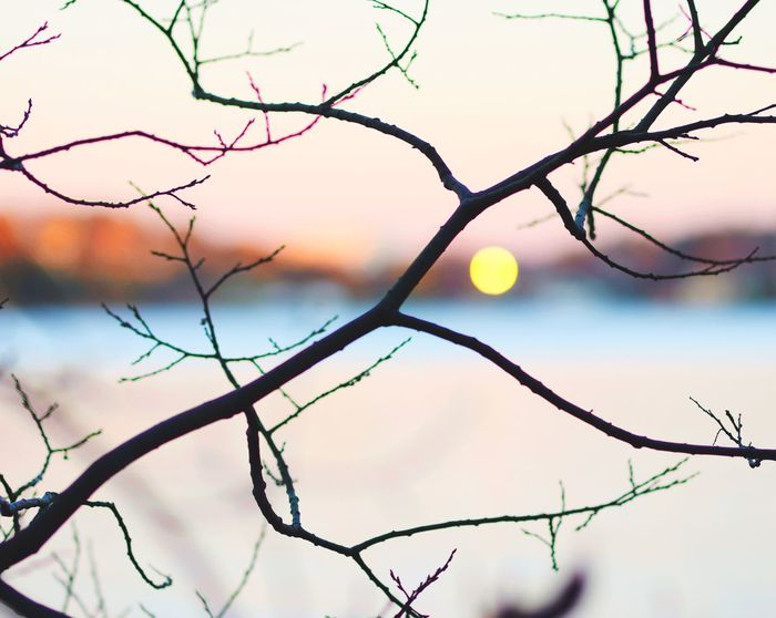 By The Lake Branch Nature Beauty In Nature Bare Tree Sky Outdoors Twig No People Day Tree Tranquility Landscape Winter Scenics Close-up