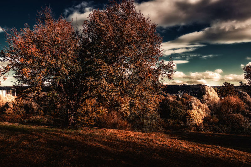 autumn mood Sky