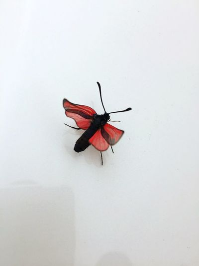 High angle view of insect on white wall