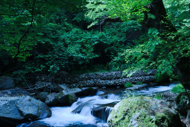 Beauty In Nature Day Japan Nature Nature Outdoors Plant Water Waterfall 吐竜 山梨 新緑 水滴 清里 滝 自然