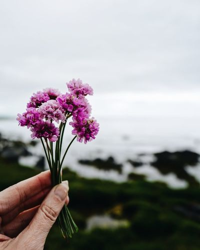 Close-up of hand holding purple flowering plant against sky