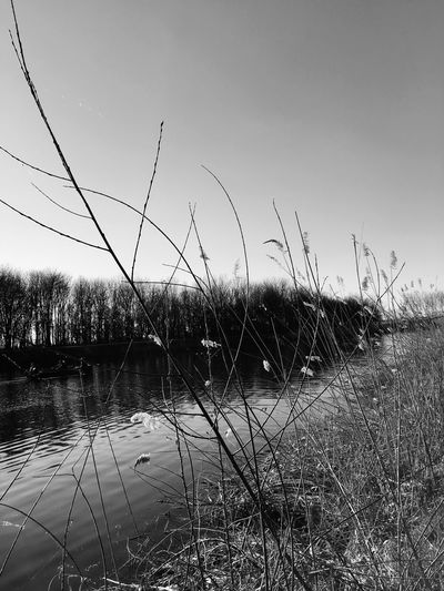 Blackandwhite Water Plant Sky Tranquility Grass Nature Growth Tranquil Scene Scenics - Nature Lake Day Reflection Non-urban Scene Outdoors Landscape No People