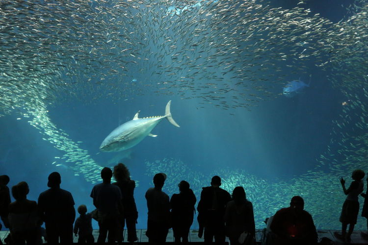 Monterey Bay Aquarium Aquarium Blurred Motion Enjoyment Fish Friendship Monterey Bay Aquarium Motion One Person Puddle Recreational Pursuit Reflection Rippled Sea Sea Life Splashing Swimming Togetherness Underwater Water Waterfront Weekend Activities Wet