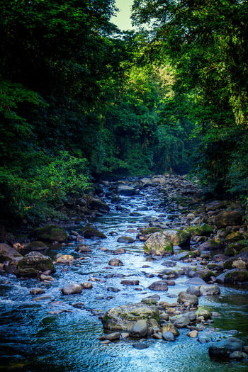 A river near Guapiles, Costa Rica. Tree Plant Forest Water Beauty In Nature No People Tranquility Nature Land Rock Solid Day Growth Flowing Water Scenics - Nature Rock - Object Tranquil Scene Flowing Outdoors Stream - Flowing Water River Costa Rica