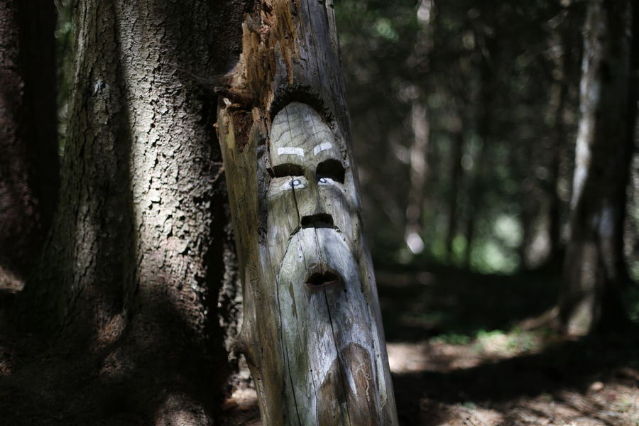 Tree Tree Trunk Forest Spooky Mystery Close-up Statue Pinaceae Sculpted