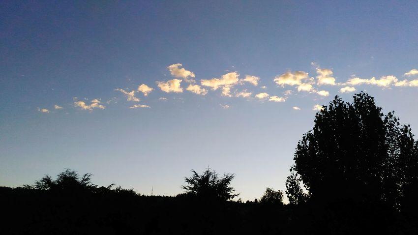 Little Clouds Fila Di Nuvole Nuvolette Tramonto Tree Bird Silhouette Defocused Bird Of Prey Sky