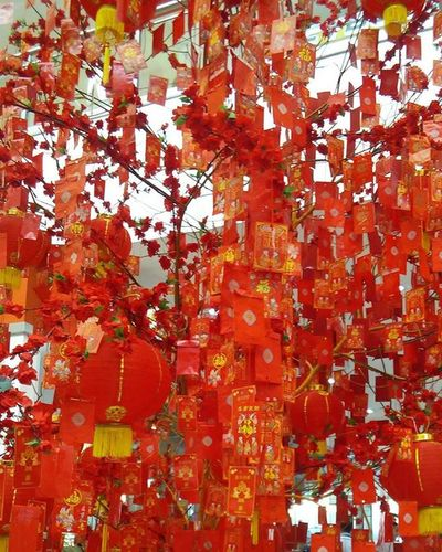 Happy Chinese New Year. ( kung hei fat choy)