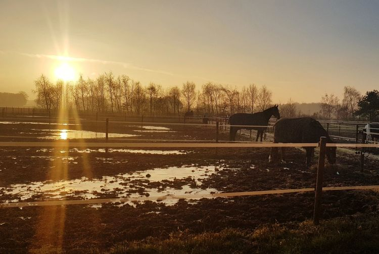 horselife Paddock, Sunset, Cattle Property, Fence Silhouette Morning Relaxed EyeEm Selects Horse Stable Horses Sunset Tree Spraying Sky
