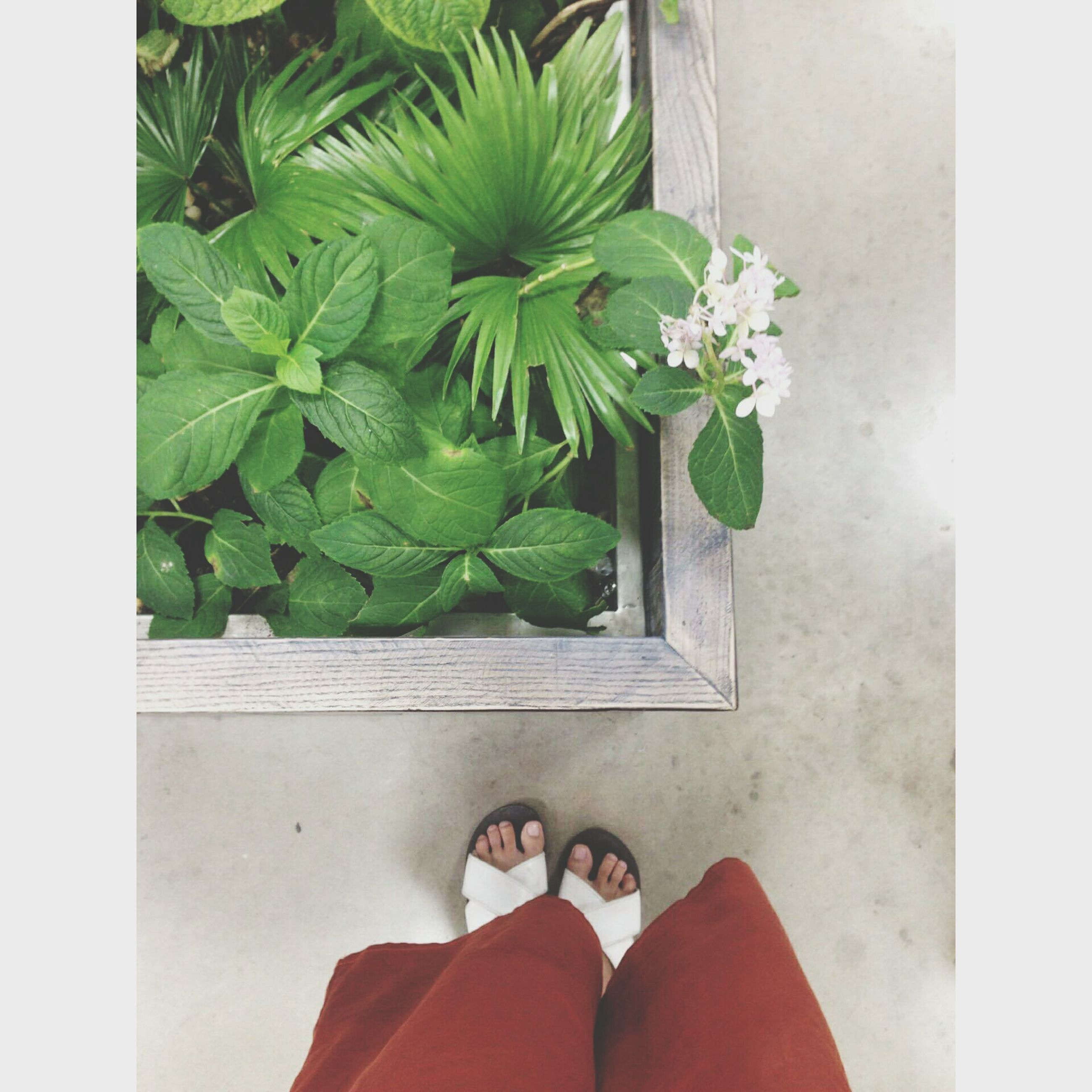 low section, person, personal perspective, leaf, plant, human foot, flower, lifestyles, growth, green color, part of, unrecognizable person, leisure activity, nature, day, close-up, green