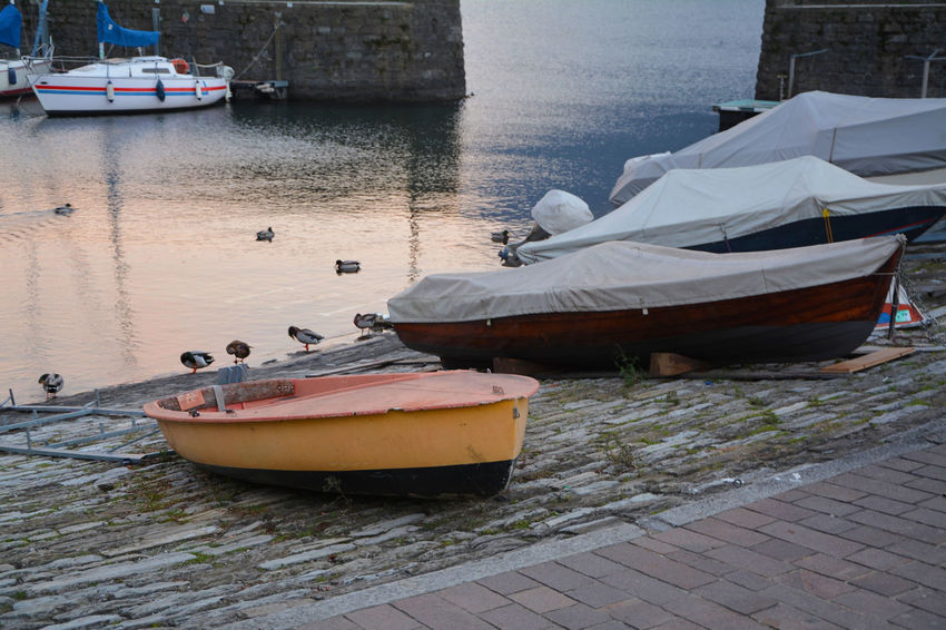 About the sunset, boats and duck at the harbor - Argegno, Como, Italy. Como Como Lake Italia Lario Lombardy Argegno Boat Harbor Italy Lake Como Lombardia Nature Nautical Vessel Outdoors Water