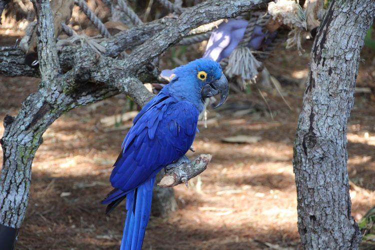 Animal Themes Bird In Tree Blue Very Blue Bird Perched On The Branch Of A Tree parrot Beauty In Nature