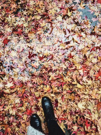 Autumn Autumn Photography Autumn Colors Autumnlove First Eyeem Photo