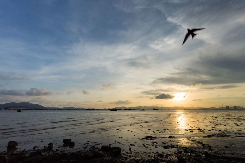 Sky Water Flying Sunset Cloud - Sky Sea Beauty In Nature Bird Animal Themes Animals In The Wild One Animal