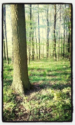 Spacer po lesie podczas Majówki. First Eyeem Photo