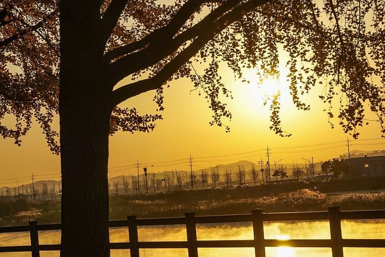 Tree No People Built Structure Architecture Outdoors River Water Bridge - Man Made Structure City Building Exterior Travel Destinations Nature Sunset Day Beauty In Nature Sky
