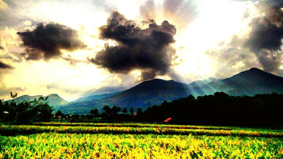 Guntur mountain Mountain Scenics Landscape Cloud - Sky Beauty In Nature Mountain Range Field Rural Scene Sky Nature Tranquil Scene Travel Destinations Garut Garutwestjava GarutEndah Garut_missyou