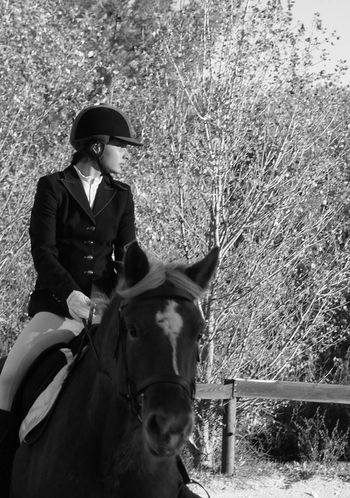 En compet' ! Dressage Competition Comtois Horse One Person Livestock Horseback Riding