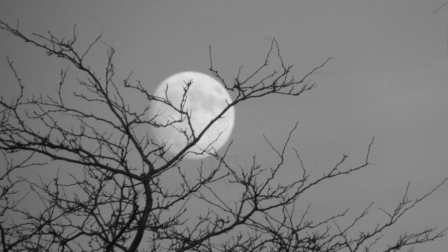 Black And White Photography Out Shooting Two Days From A Super Moon Through The Trees Cool_capture_ Cadillac Sky Pure Michigan