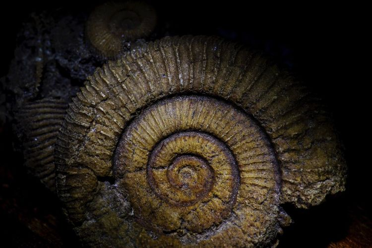 Ammonite History Fossil Fossils Fossils And Rocks Macro Light - Natural Phenomenon Beauty In Nature Tokina AT-X Pro Macro 100 F2.8 D Macro Nature Open Your Eyes For Mothernature Nature_collection Macro_collection Macro Photography Open Your Mind Eye4photography  Beautiful EyeEm Best Shots Check This Out Structures Structure Macro Beauty Light And Shadow Nature Focus On Foreground Close-up