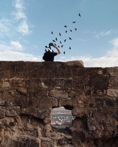 Birds flying over the wall