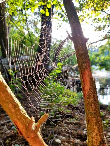 Beauty In Nature Nature Nature Photography Nature_collection Morning Light Morning Morgenstimmung Seelandschaft Seascape Samsung Naturephotography Samsung Galaxy S8 Photography Tree Close-up Spider Web Spider Woods