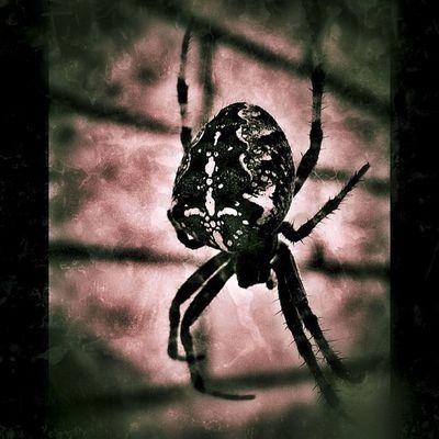 #masters_of_darkness #igdungeon #rsa_dark Spider Grunge Dark Arachnid Igdungeon Macroaddictsanonymous Rsa_dark Masters_of_darkness United_by_darkness Igd_realmofthedead Anthropods_anonymous Bestofmacros Ig_dark