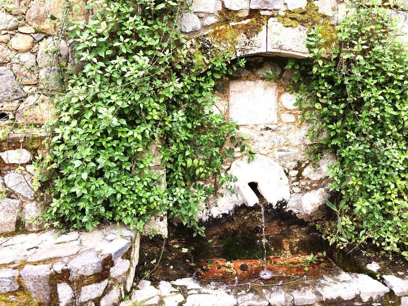 Nature Water Fountain Spring Waterspring Green Leafage EyeEm Diversity EyeEmNewHere EyeEm Selects