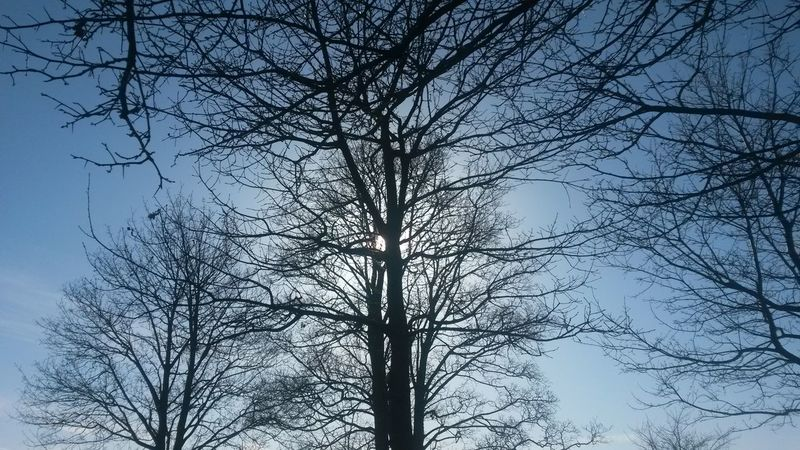 Tree Sky Branch Nature No People Beauty In Nature Low Angle View Outdoors Day Bare Tree Growth Silhouette Clear Sky Close-up Sunlight Sunshine Sunny - in The Danish Countryside