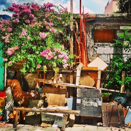Green Abodes... It's More Fun In The Philippines! Dwellings Philippines