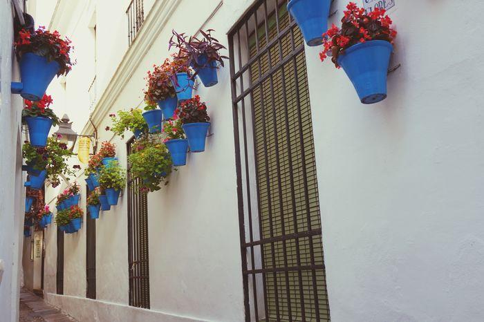 Blue Floral Decoration Flowerporn White España SPAIN Córdoba Andalucía EyeEm Selects Flower Multi Colored Hanging Building Exterior