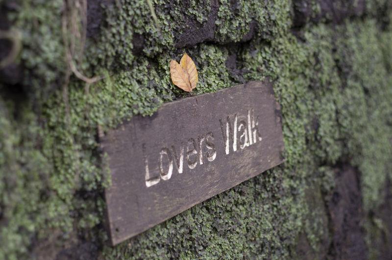 Lovers Walk Walks In The Park Walk Love Park Ivy Moss Greanary Pentax K-5 Todmorden