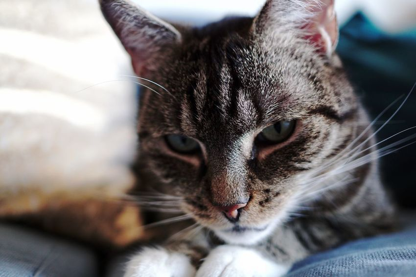EyeEm Selects Pets Cat Domestic Cat Mammal Animal Themes Feline One Animal Domestic Domestic Animals Animal Close-up Vertebrate Indoors  No People Animal Body Part Home Interior Portrait Looking At Camera Focus On Foreground Whisker