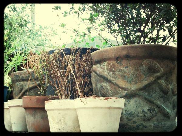 Es vida las plantas!!!..