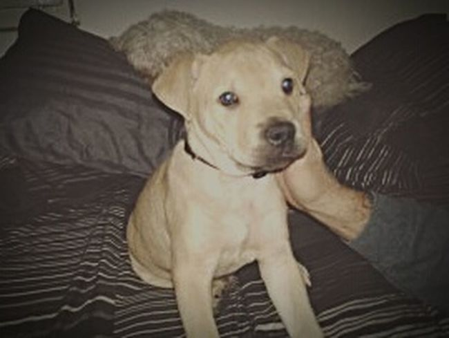 My right hand man, Buster, when he was a wee lil thing.