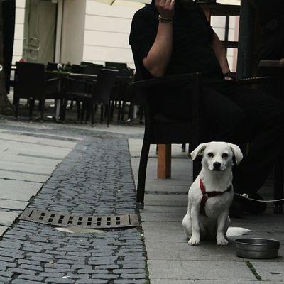 Hätte ihn fast mitgenommen Puppy Dog Mitderkameramalwiederlos Vscocam