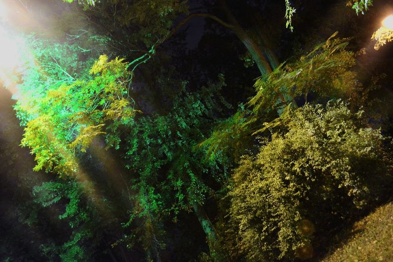 Green Lightsin Centercity Kiev Multi Colored Abstract Horizontal No People Close-up Tree Beauty In Nature Nature Galaxy Outdoors Astronomy Day Colour Of Life Forest Night Lights Colours And Patterns Nikon Art Artphoto Perspective