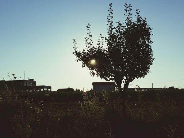 PhonePhotography Durres Albania Hot Day Trees Hidingfromthesun