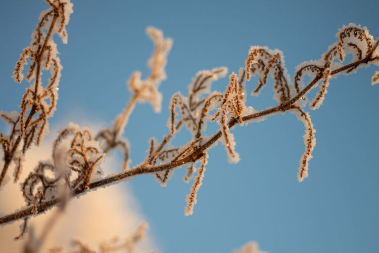 Beauty In Nature Close-up Cold Temperature Day Growth Nature No People Outdoors Plant Sky Snow Winter