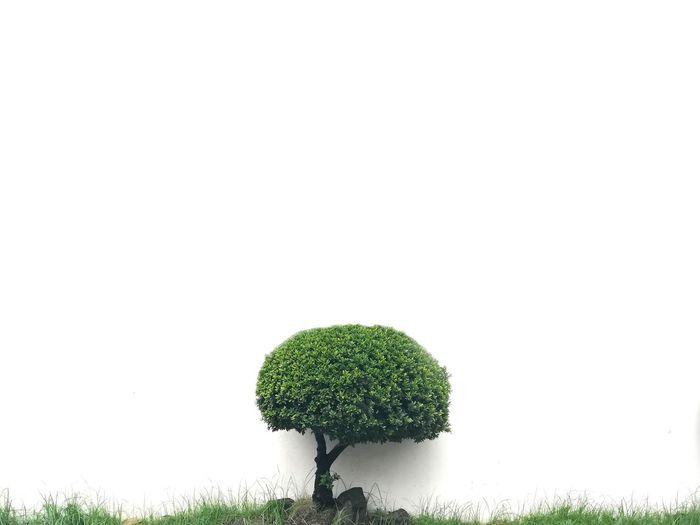 Minimalism Minimal Minimalist EyeEm Best Shots EyeEmNewHere EyeEm Gallery EyeEm Selects EyeEmBestPics Architecture Minimalist Architecture White Background Tree Social Issues Close-up Grass Sky Green Color Plant Single Tree Patchwork Landscape Plant Life Botany Stem Apple Blossom Blossom Dew Softness Blooming In Bloom Dissolving