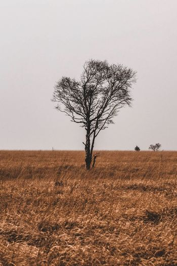 Point mort. Landscape Tree Bare Tree Tree Trunk Lone Outdoors Beauty In Nature Nature No People Day Beauty In Nature EyeEmNewHere Tree Be. Ready.