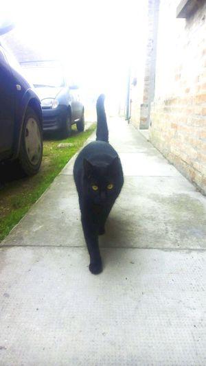Biscuit😻🍪 Cat Black  My Love