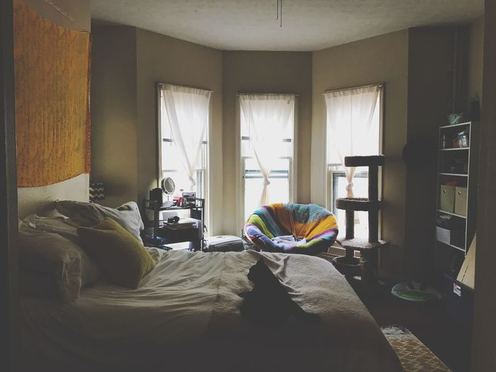 Indoors  Home Interior Window Bay Window Bedroom Bedroom Window Cat Black Cat Day Daylight No People Check This Out Curtains Pets One Animal Bed Soft Light