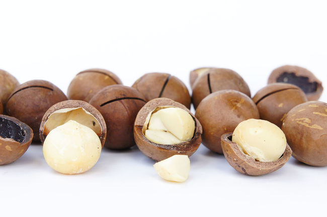 macadimia nuts Brown Close-up Day Food Food And Drink Freshness Healthy Eating Macadamia No People Studio Shot White Background