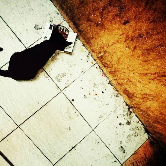 Homeless Animal Kitten Animalphotography Outdoors Domestic Cat Homeless Kitten HuaweiP9 HuaweiP9Photography Huawei P9 Plus Homelessness  Hua Wei P9 Plus Homeless Cats Mammal No People Huaweiphotography Cat Animal Themes One Animal Pets Homeless Cat Animal Homeless Domestic Animals Homelessness