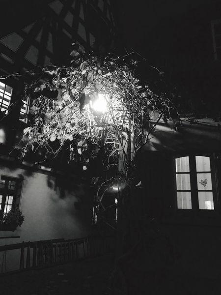 Ein Kiwi Baum in Szene gesetzt Night Light Bulb Hanging Illuminated Electricity  EyeEmNewHere