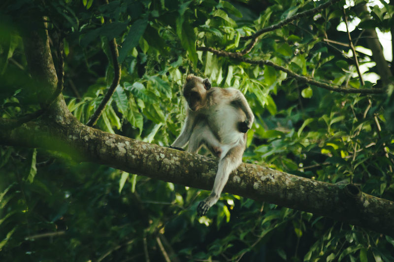 First Eyeem Photo Animals In The Wild Nature Animal Animal Themes Animal Wildlife Forest Jungle Monkey No People Branch Tree One Animal Primate Mammal Sitting Full Length Day Low Angle View Green Color Outdoors