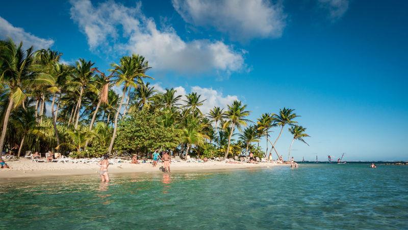 Beach La Caravelle at Guadeloupe. Aida AidaDiva Cruise Ship Guadeloupe La Caravelle Sunny Travel Beach Beauty In Nature Blue Carribean Landscape Nature Outdoors Palm Tree Sea Travel Destinations Tree Vacations