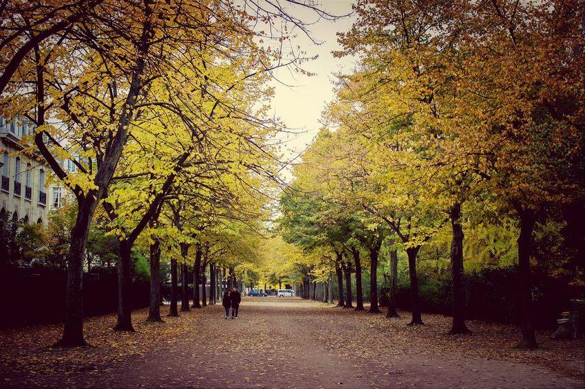 Trees EarlGrey Park Paris Champ de Mars