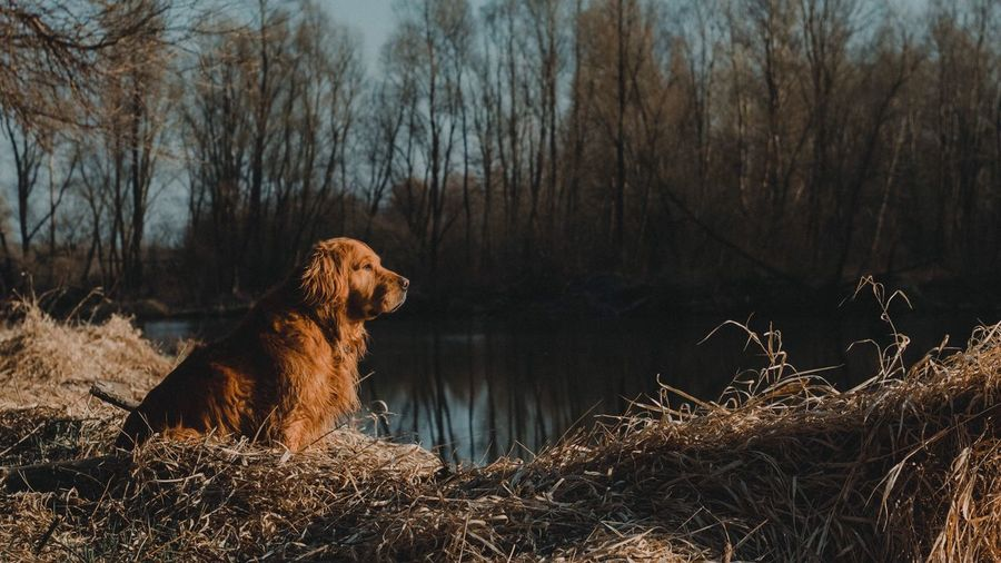 Panoramic View Of Trees And Dog